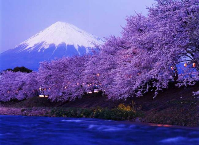 Фудзияма фото весна