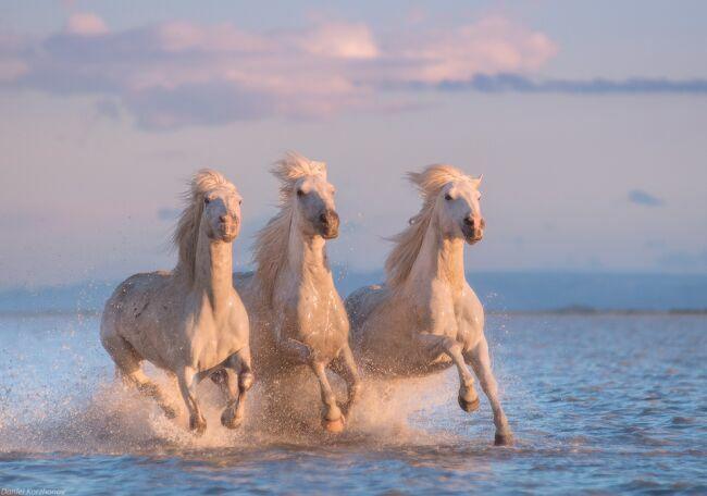 Тройка лошадей на фото Коржанова