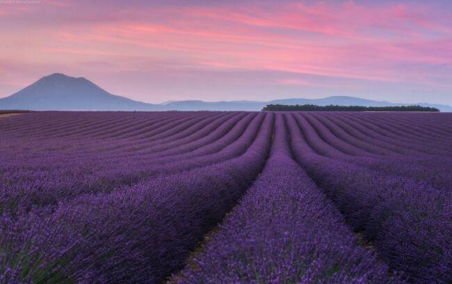 Красивые пейзажи природы фото лаванды