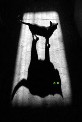 В мире теней
