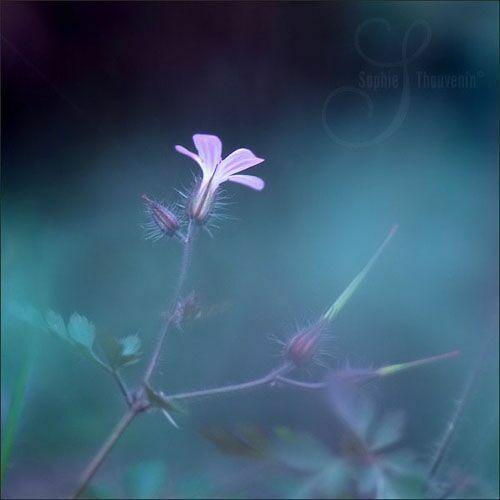 Лютики-цветы