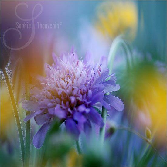 Нежные цветы на фото
