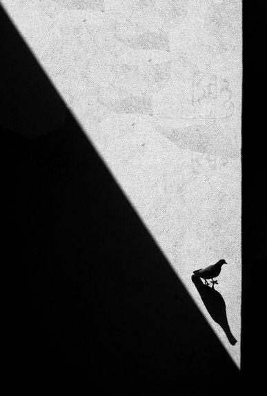 В погоне за своей тенью