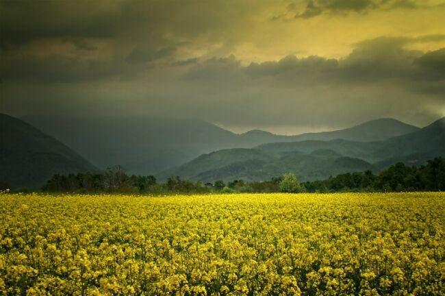 Albena Markova фото пейзажи природы