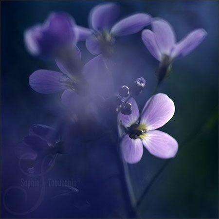 Фмолетовые цветы