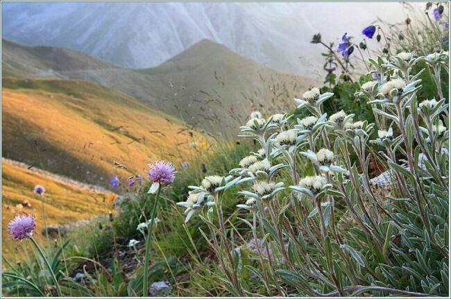 Цветы Казахстана