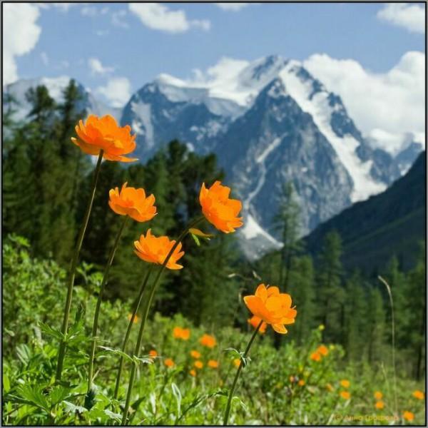 фото горного Алтая летом