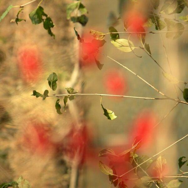 нежность картинки фото цветы