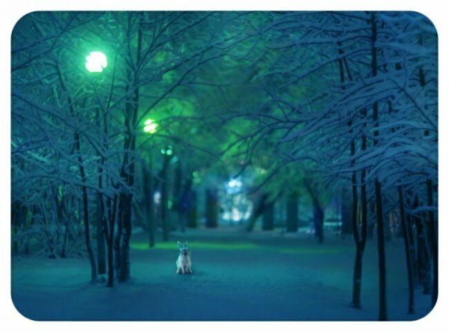 наш двор зимой на фото