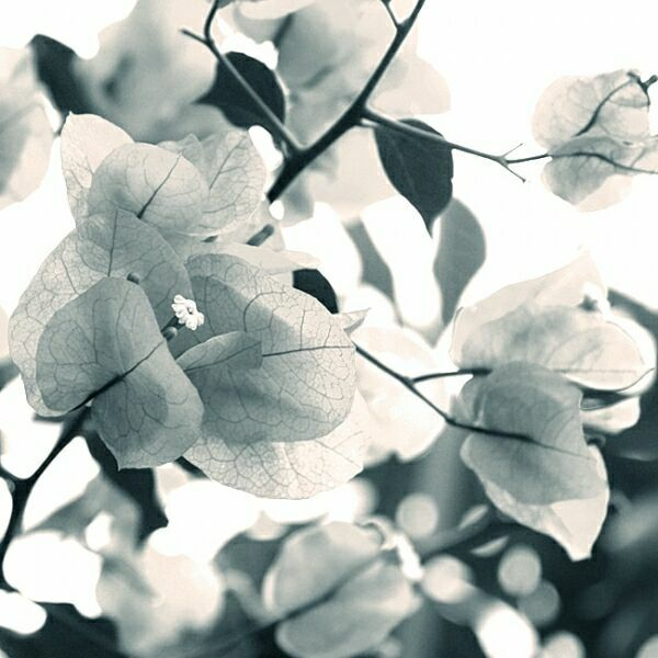 нежность черно-белое фото