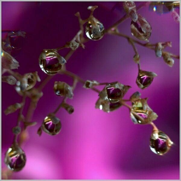 капельки росы на фото