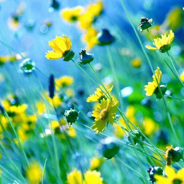 цветы нежность фото