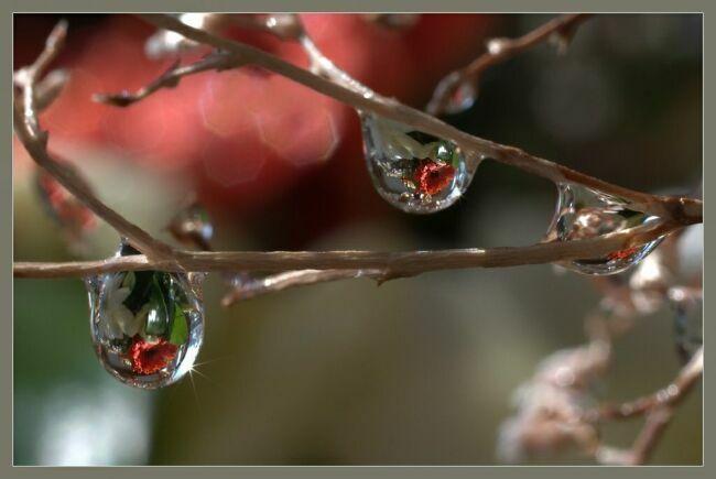 бриллиантовая роса