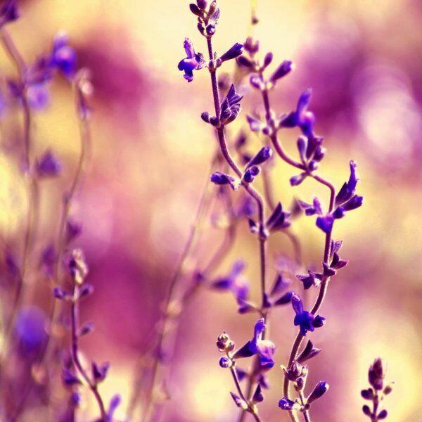 цветы на фото нежно