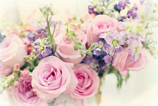 Цветы розы фото