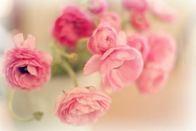 Розовые цветв