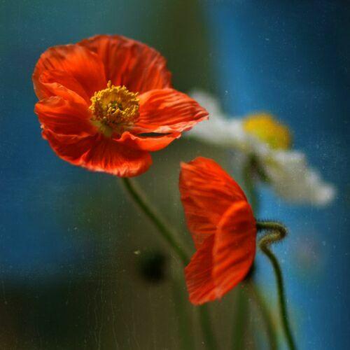 фотографии полевых цветов