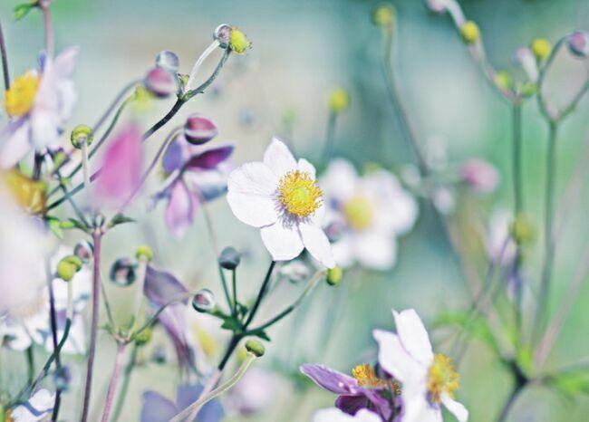 фото полевые цветы