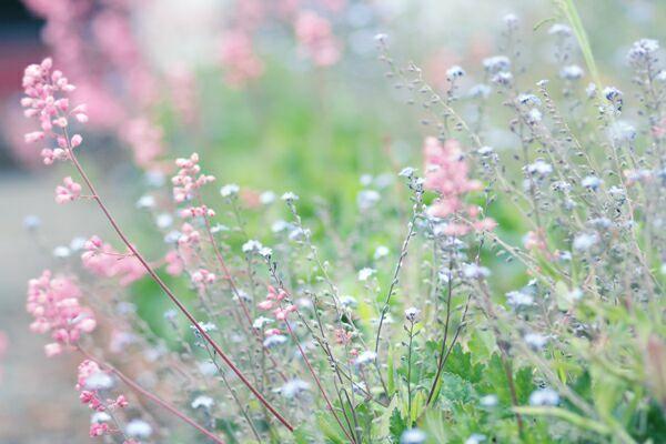 полевые цветы картинки