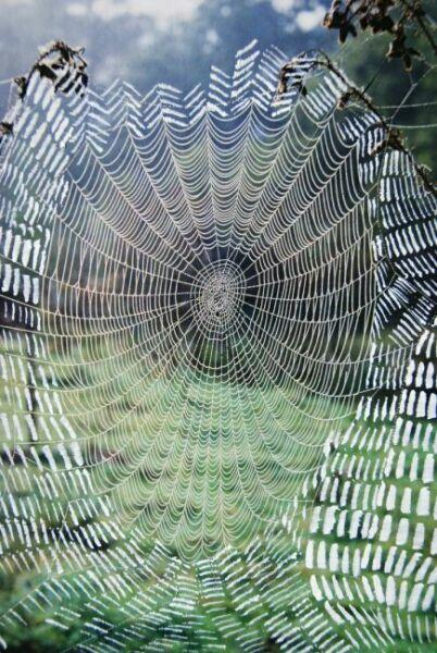 большая осенняя паутина