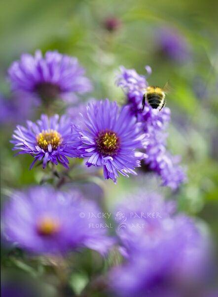 сиреневые летние цветы на фото