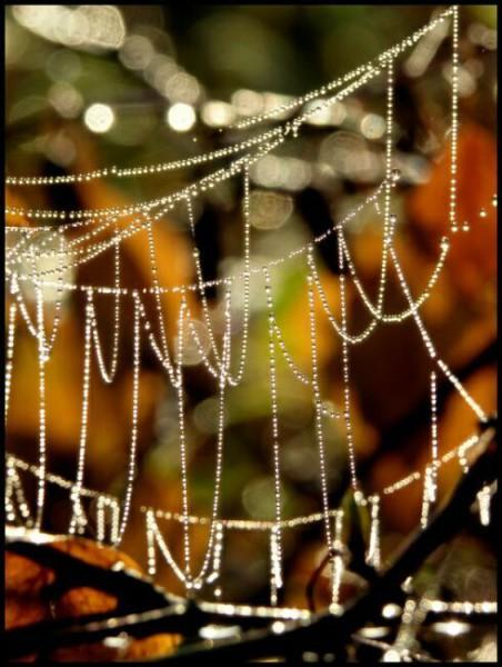 Паутина паука фото