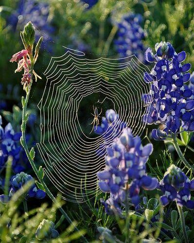 паутина с пауком картинки