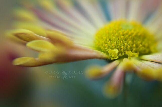 картинки летние красивые цветы