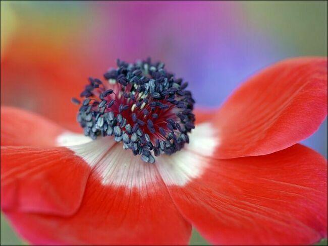 красные летние цветы на фото
