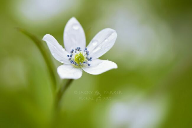летние цветы на фото