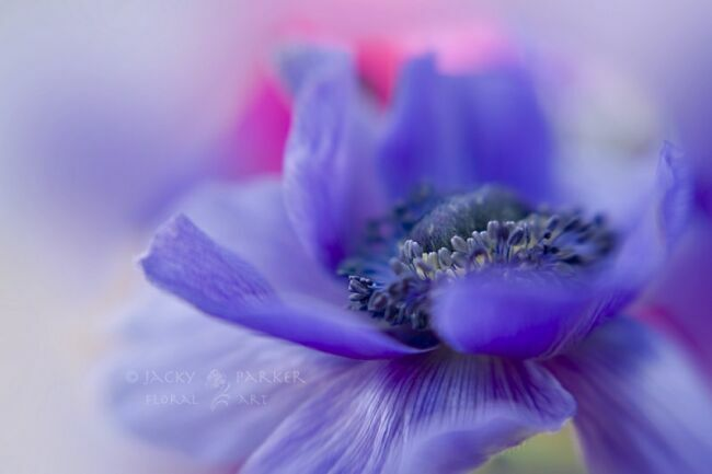 Летние цветы фото