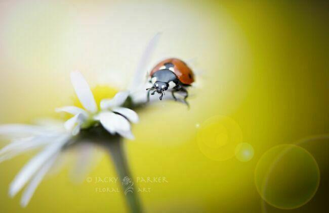 картинки летние цветы фото