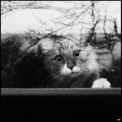кот в окне  фото