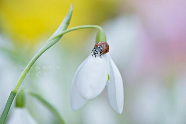 картинки красивые летние цветы фото