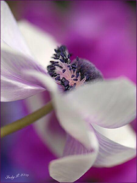 белые летние цветы на фото