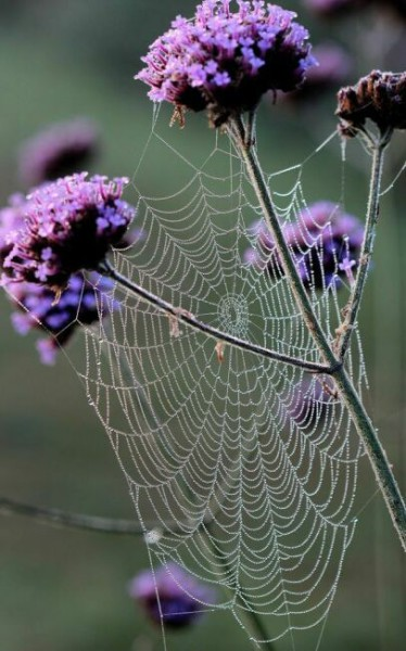 паутина на цветах