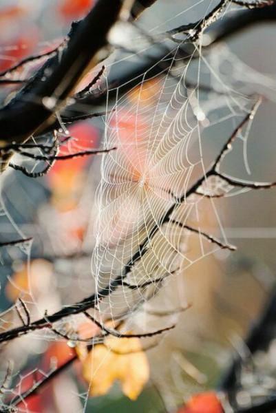 осенняя паутина на дереве