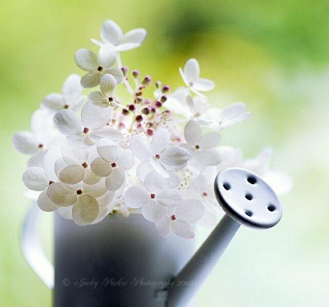 букеты летних цветов фото