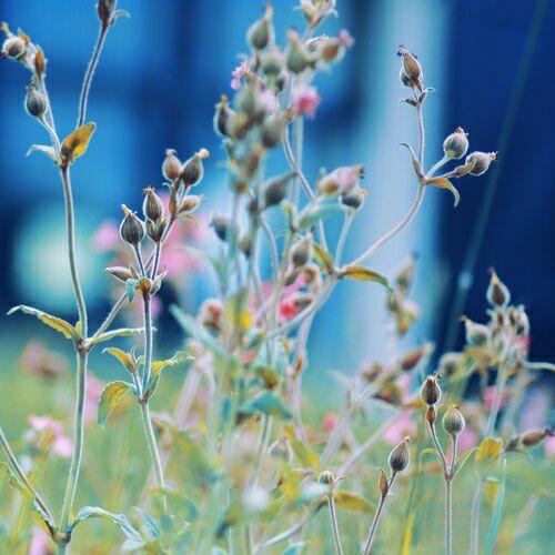 полевые цветы картинки и фото