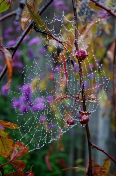 паутина вросе осенью