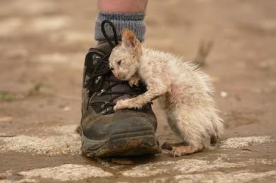 о сострадании и милосердии