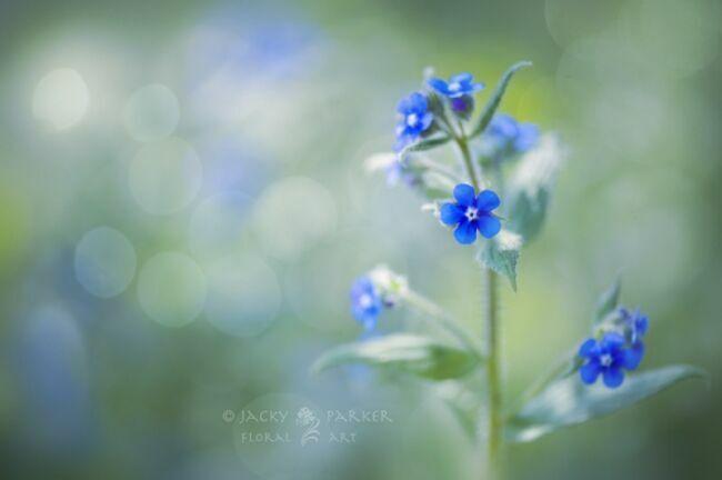 летние цветы садовые фото