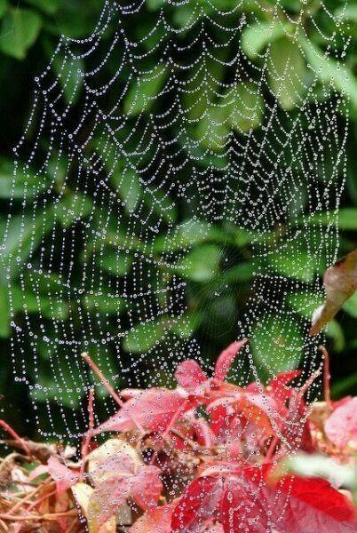 осенняя паутина в лесу