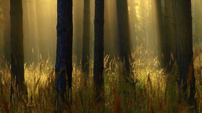 Marek Jedzer солнечный лес фото