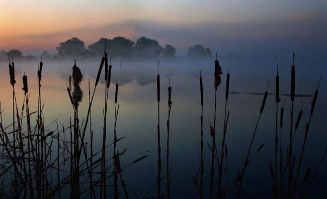 Marek Jedzer камыши в тумане