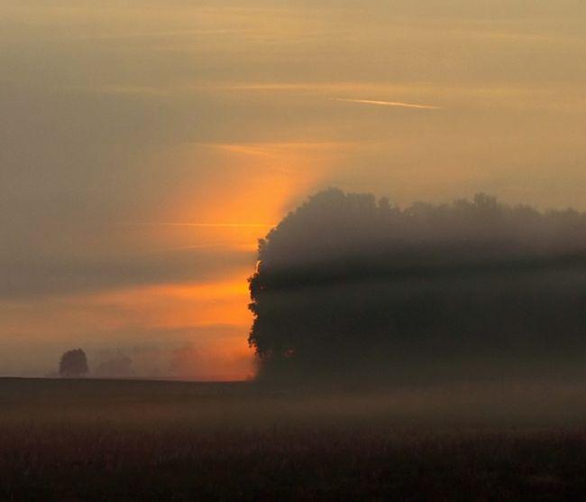 Шкляревский - летний пейзаж