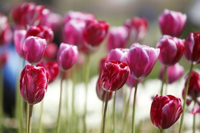 цветы самые красивые