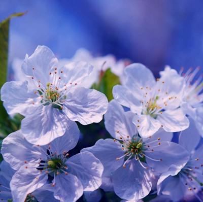 робкая весна