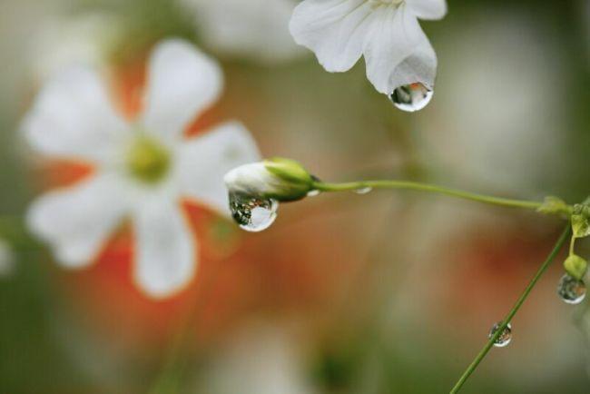 капли на красивых цветах