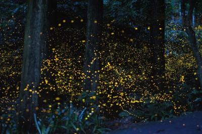 много светлячков